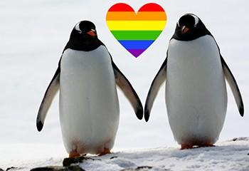 Au zoo de Berlin, deux pingouins gays pourraient bientôt devenir papas