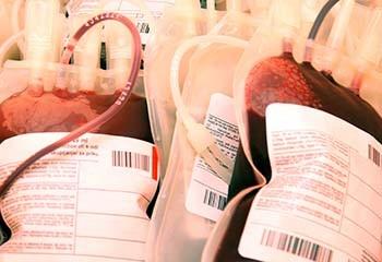 Allemagne : Le parti libéral-démocrate exige la levée immédiate de l'interdiction du don du sang pour les personnes LGBT+